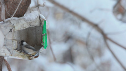 Birds in the winter park Footage