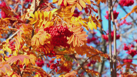 Colourful autumn background Footage