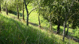 green grass with trees - hill - meadow of grass - sun rays - slider Footage