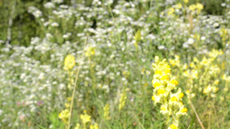 meadow of flowers - trees in the background - detail of... Stock Video Footage