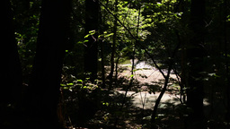 brook in the forest - asphalt pathway- trees and bushes - sun rays (contrast) -  Footage