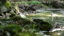 brook in the forest with stones and grass - sun rays - slider Footage