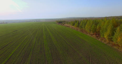 Flying Above Fields stock footage