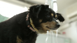 MVI 0580 Dog at the pets hospital Footage