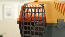 MVI 0528 Portable cat carrier with small kitten Footage