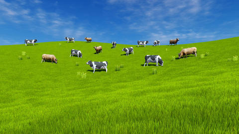 Milk cows graze on green grassland Animación