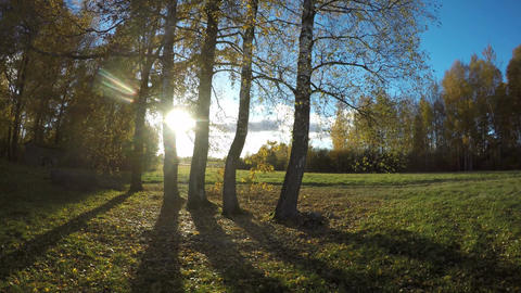 Sunshine shining through birch trees in autumn in countryside, time lapse 4K Footage