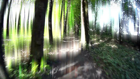 Glowing Road in Forest Footage