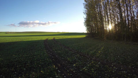 Landscape with young green wheat field, time lapse 4K Footage