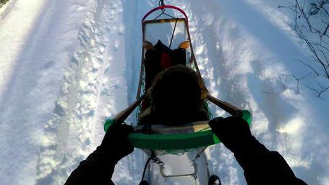 Musher riding sleigh Footage