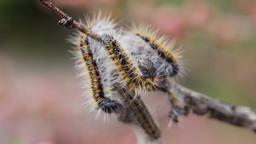 Caterpillar 0
