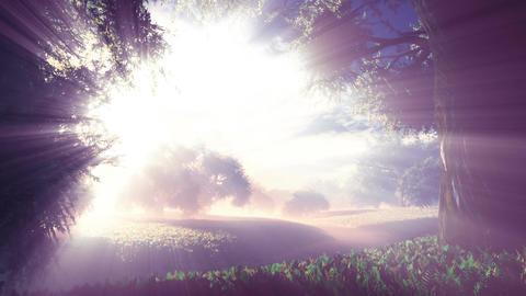Amazing Natural Wonderland in the Sunset Sunrise with Lightrays 3 Animation