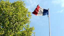 French flag - green tree - blue sky - sunny Footage
