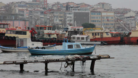 Seagulls and boats in Istanbul Footage
