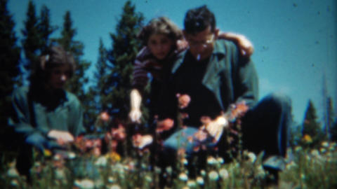 1953: Dad and daughters picking colorful wildflowers in mountain meadow Footage