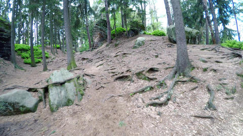 Walk on the forest tracks between rocks in the sunny summer day Footage