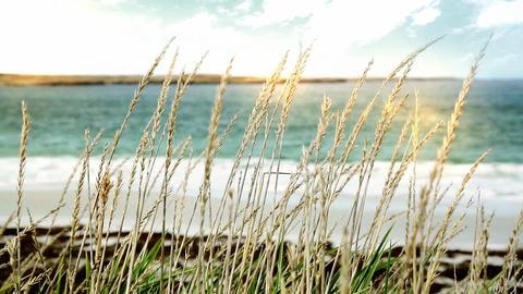 Beach In Malvinas Islands Footage