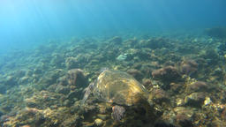 Underwater green sea turtle and sun rays Footage