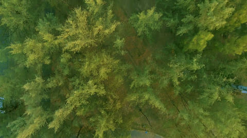 Aerial View. Flying over the beautiful mountain and beautiful forest. Aerial cam Footage