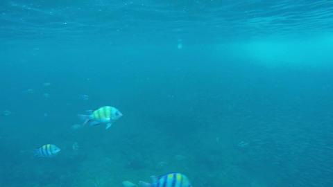 School of fish feeding among corals Footage