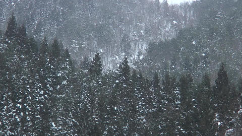 Snow Fall / Winter / Trees - Shizukuishi (Iwate, Japan) - Fix ภาพวิดีโอ