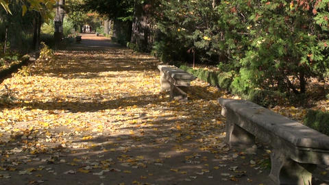 Stone benches in the autumnal park Footage