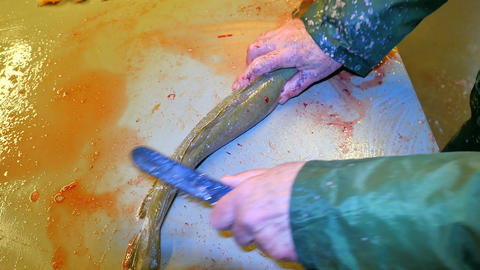 Clearing And Filleting Sea Fishes 0
