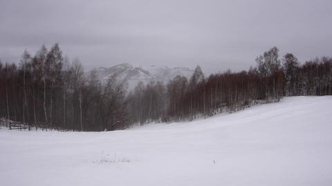 Wisps of mist rising from the thick forest of birch on a snowy mountain 776 Footage