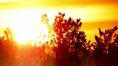 Sunset Sunshine between Trees Timelapse Background Backdrop 영상물