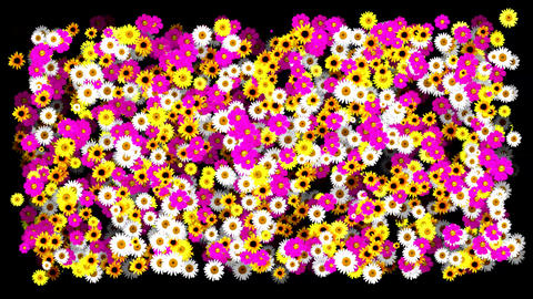 Flowerbed - Meadow of Blooming Colorful Flowers Animation Background. Alpha Chan Animation