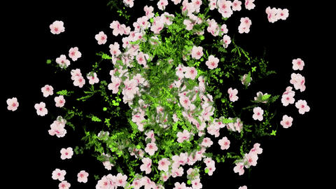 Flowers Explosion Animation Background. Alpha Channel included Animation