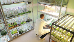 Man scientific research algae storage, oxygenation and laboratory Footage