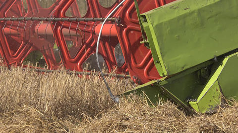 Farm combine harvesting trashing wheat grain field in summer. Panorama. 4K Footage