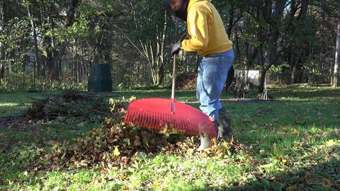 worker rake autumn leaves in backyard. Season work in autumn. 4K Live Action