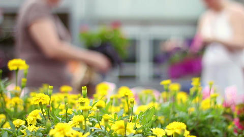 Defrocused women shopping for flowers in outdoor area in... Stock Video Footage