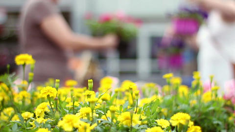 Defrocused women shopping for flowers in outdoor area in spring Footage