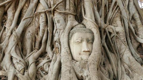 Ayutthaya Head Buddha Roots Tree 4k Footage