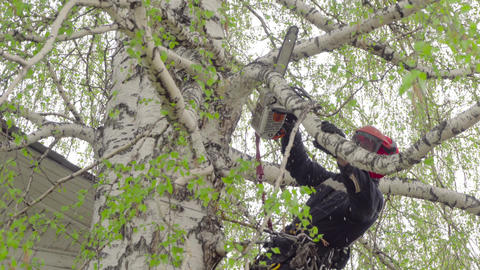 Arborist cutting branch of the birch Footage