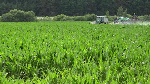 farm tractor fertilize maize pesticide, herbicide at summer. 4K Footage
