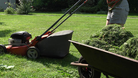 Wheelbarrow with cut grass and gardener woman mowing lawn with mower. 4K Footage