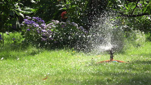 Plastic automatic water sprinkler strong spray watering grass. 4K Footage