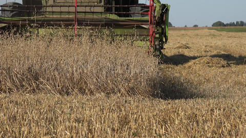 harvester combine machine blades cutting ripe oat ears in farm agriculture field Footage