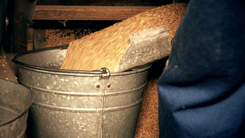 Machine sifting grain and worker hands draw oat and pour into bucket Footage