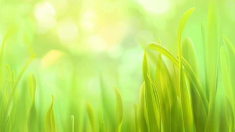 Sky And Grass (1) Animation
