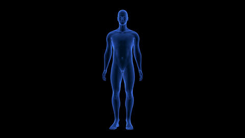 Blue Human Anatomy Body 3D Scan render - rotating seamless loop Animation