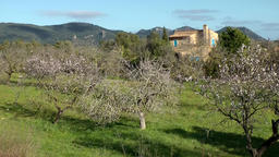 Spain Mallorca Island various 008 country house and blossoming almond trees Footage