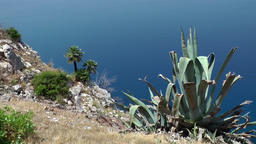 Spain Mallorca Island various 014 agave on plateau at the west coast Footage