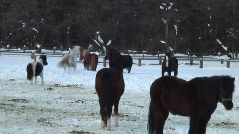 Horse Farm in Winter - Shizukuishi (Iwate, Japan) - Fix