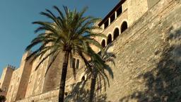 Spain Palma de Mallorca 099 palm tree throws shadow on fortress wall Footage