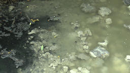 Wastewater drain pipe outlet, flowing into the floodplain Footage